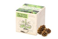 Набор для выращивания «Экокуб», лиственница сибирская